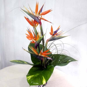 5 Bird of Paradize handbouquet-Kindly order 1 day advance
