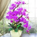 Artificial Phalaenopsis Orchid Table Arrangement 2.5 Ft