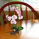 Artificial Phalaenopsis Orchids in Driftwood 35cm Height