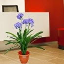 Artificial Agapanthus Flowering Plant 1m Height