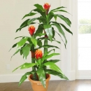 Artificial Ginger Red Torch flower
