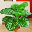 Artificial Variegated Apple Leaf Plants 3 Feet Height