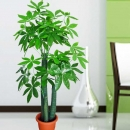 Artificial Pachira Tree 5 Feet Height