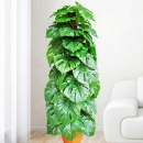 Artificial Monstera Plant 145cm Height