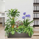 Artificial Dracaena Plants Group in Planter Box