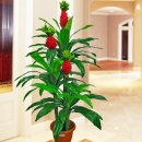 Artificial Ginger Plant 160cm Height