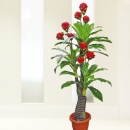 Artificial Ginger Plant 160cm Height ( 9 Flowers )