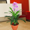 Artificial Cymbidium orchid Plant 80cm height