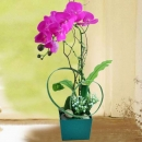 Artificial Purple Phalaenopsis Orchid Arrangement in Green Plastic Pot