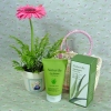 Aloe Moisture Peeling Gel with Potted Pink Gerbera