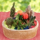 Group of catus mini garden With Colored Stone