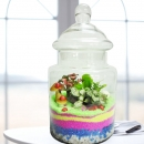 3 Mini Live Plants Terrarium in Glass Vase 30cm Height
