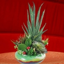 Artificial Aloe vera & Cactus in Glass Vase