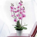 Artificial Phalaenopsis Orchid Table Arrangement 2Tone Purple / white