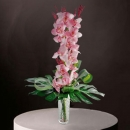 Cymbidium orchids Delivery in Singapore