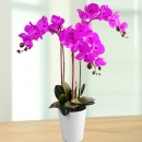 Artificial Phalaenopsis Purple Orchid Table Arrangement