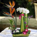 Phalaenopsis Orchids & Bird of paradise ikebana Arrangement